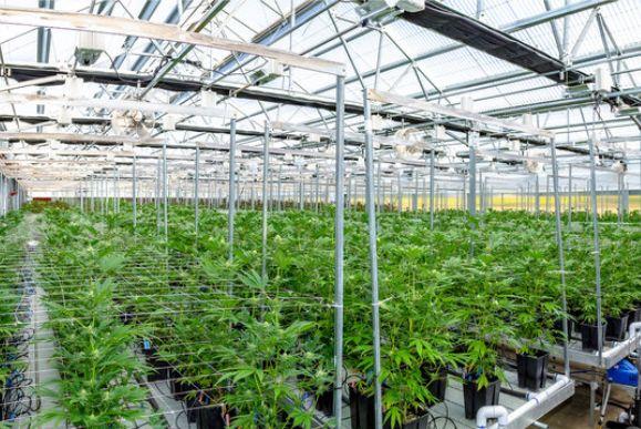Cannabis Aktien kaufen